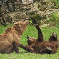 Los 5 mejores parques faunísticos para descubrir en familia