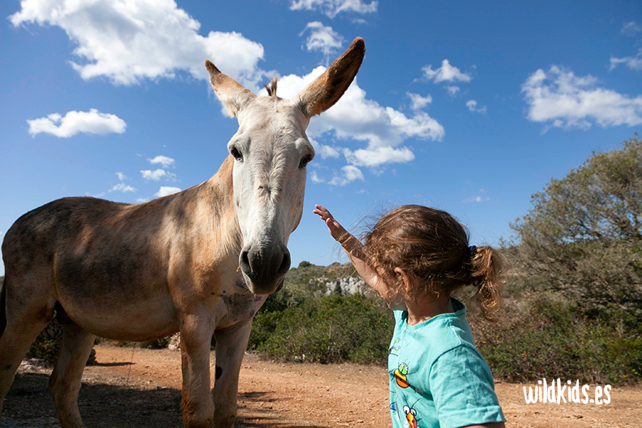 cami-cavalls-menorca-en-familia-wildkids-6