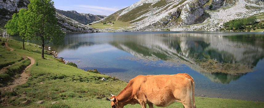 Ruta de Los Lagos de Covadonga en el Parque Natural de Picos de Europa